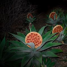 Pizza in the Wild #photography