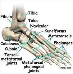 Introduction to the metatarsophalangeal joint pain. What is MTP joint pain? How do you diagnose and treat metatarsophalangeal joint pain? Foot Anatomy, Anatomy Bones, Human Body Anatomy, Chiropractic Center, Ankle Pain, Medical Anatomy, Health Pictures, Medical Terminology, Qi Gong