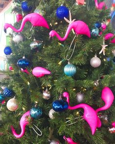 Flamingo in a pear tree!