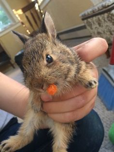 Did you perhaps want to see a small, small bunny with a small, small carrot?