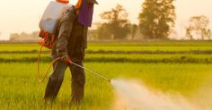 Crashing Monsanto's Pesticide Party In Beijing | GreenMedInfo