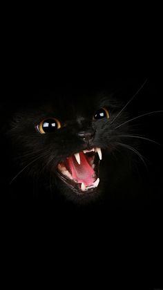 Oooooooooooh Kitty no se divierte - Schneemann - Gatos Pretty Cats, Beautiful Cats, Animals Beautiful, I Love Cats, Crazy Cats, Cool Cats, Cat Wallpaper, Animal Wallpaper, Wallpaper Free