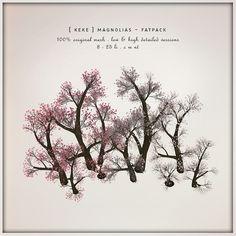 [ keke ] magnolia trees @ The Seasons Story   Flickr - Photo Sharing!