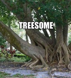 funny threesome