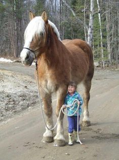 Giant horse and sweet little kid.