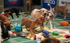 10 Reasons You Should Watch The Puppy Bowl Instead Of The Super Bowl This Sunday