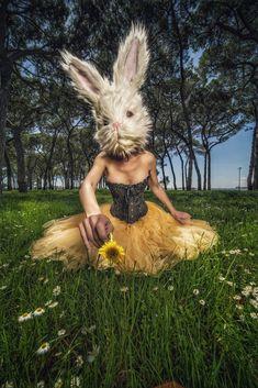 Life of bunny Decay, Bunny, Places, Life, Beauty, Cute Bunny, Rabbit, Beauty Illustration, Rabbits