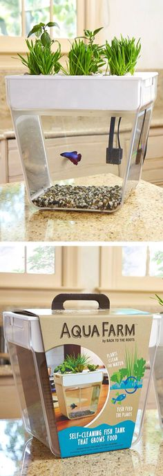 Fish tank & garden all in one. Grow herbs, succulents with this aquaponic farm & as your fish produces natural waste, the water holds the fertilizer for the plants above (this self-cleaning three-gallon tank is a perfect size for a betta & aquatic plants; the tray runs the pump & accommodates up to six plants).