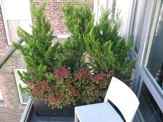 Evergreens breathe life to small balconies and provide a privacy screen. What a great space to enjoy your morning coffee!