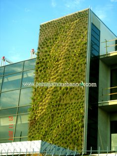 Muro verde plantas Ignacio Solano Jerez de la Frontera Brassica