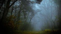 Картинки по запросу силуэты в лесу в тумане