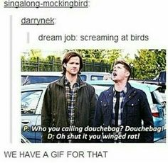 Supernatural: We have a gif for that,  and interesting dream job.