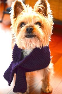 dog knitted scarves