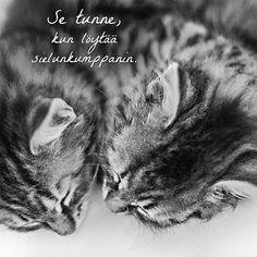 #sielunkumppani #bestfriends #parhaatkaverit #soulmates #catstagram #cats…