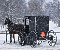 Amish Buggy in Snow | by Don Iannone