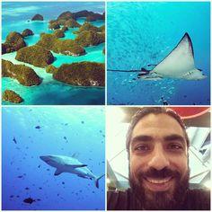 #palau #palauiisland #padi #underwaterphotography #uwp #uwphotography #cemyildiz #dive #diving #cemyıldız #ilovediving by cyberperio