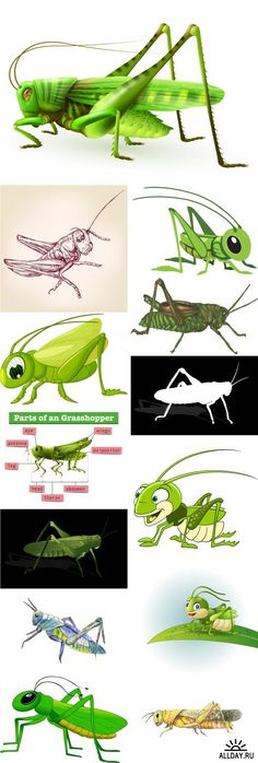 Collection of locust grasshopper insect pest a vector image - 25 EPS