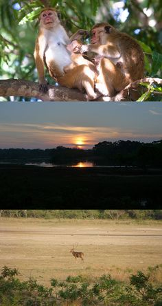 loved our time at Yala. Ceylon Sri Lanka, Southern Province, Island Nations, Most Visited, Cyprus, Monkeys, Malta, Philippines, Postcards