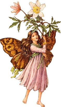 The Windflower Fairy ~ by Cicely Mary Barker