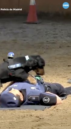 Poncho the police dog shows off CPR skills