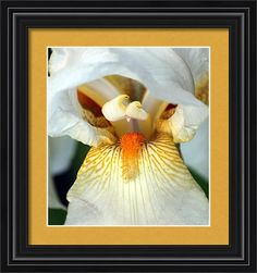 Nature Framed Print featuring the photograph The Heart Of A Bearded Iris by Sheila Brown