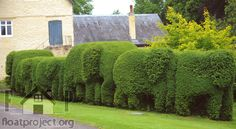 How to care for your hedges