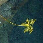 Life on the Ocean Floor: Antarctic Ocean Hydrothermal Vent Exploration