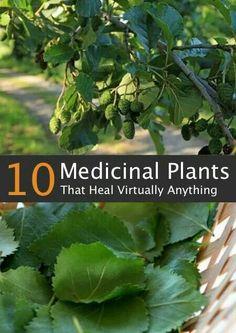 10 Medicinal Plants That Heal Virtually Anything