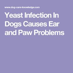 Yeast Infection In Dogs Causes Ear and Paw Problems
