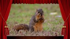 Zvieratká v lese - učíme sa s deťmi mená a zvuky zvierat (hádanka pre de... Nursery, Education, Youtube, Animals, Animales, Animaux, Baby Room, Animal, Child Room