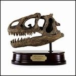 Allosaurus Dinosaur Skull Model - This handsome dinosaur skull model is highly detailed from polyresin and is mounted on a solid wood base. $69.00 in stock and ready to ship! Shop www.DinosaurToysSuperstore.com