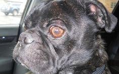Birdfeeder Keeps Dog Alive Until Winter Rescue Unfolds...I love happy endings!