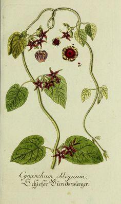 Jarhg.8 (1794) - Plantarum indigenarum et exoticarum icones ad vivum coloratae, oder, Sammlung nach der Natur gemalter Abbildungen inn- und ausländlischer Pflanzen, für Liebhaber und Beflissene der Botanik / - Harvard University Botany Libraries via BHL