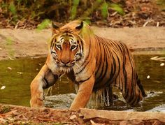 Sundarbans National Park - The Largest Tiger Reserve Park In India - West Bengal - India - AttractionWorld.net
