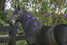 Beutiful black horse with violet flowers in the mane. Most Beautiful Animals, Beautiful Horses, Beautiful Creatures, Magical Creatures, Horse Mane, Friesian Horse, Andalusian Horse, Black Horses, Wild Horses