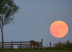 Harvest Moon coming up in September