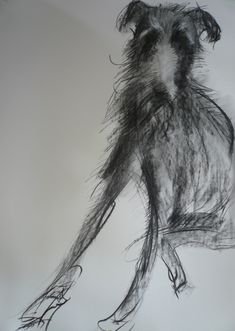 Sally Muir, 'dog a day' project. Wolfhound? His eyebrows are wonderful. Zazzy wirey neck fur. Love it.