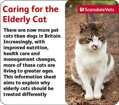 Caring for the Elderly Cat. This will be good information for our 4 cats, ages 6-7.