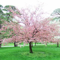 crab apple trees are both 'natural' looking, not too big and have spring flower and autumn colour