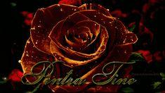 trandafir.gif (640×360)