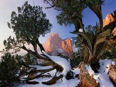 Centuries-old juniper trees frame red sandstone rocks in Garden of the Gods park in Colorado Springs