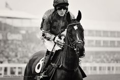 A.P. McCoy with Taquin Du Seuil, Cheltenham