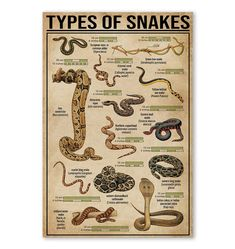 All You Should Know About Snake Poster, Knowledge Poster, Gift For Camper Urban Survival, Wilderness Survival, Camping Survival, Survival Prepping, Survival Skills, Survival Supplies, Camping Hacks, Reptiles, Amphibians
