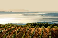 GoAltaCA | In the clouds above the San Francisco peninsula there was a perfect storm that resulted in the Ridge Montebello vineyards. It was originally terraced and planted by an Italian doctor, Osea Perrone.
