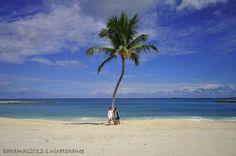 Bahamas  is  very ..very..very beautiful place. Coconut tree is landmark in paradise island
