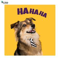 Laughter is the sun that drives winter from the human face. #vamp #jacobblack #bellaswan #carolineforbes #damon #vampires #nian #goldenlove #goldensoninstagram #thedailygolden #retriversgram #retriverstagram #puppysketch #instadogsfeature #goldenoftheday #steroline #welovegoldens #retrieversofinstagram #Puppytrip #goldengram #myesadoctor #emotionalsupportanimals #emotionalsupportdog