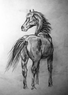 This is just a sketch about one of the most beautiful creatures I've ever seen.