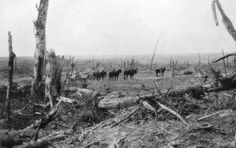 WW1, Battle of the Somme. Delville Wood in the Summer of 1916.