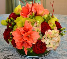 Amaryllis & Cymbidiums from Mockingbird Florist in Dallas, TX