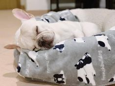 BATPIG Pet Supply - Shop Frenchie Batpig Harnesses, Collars, Leashes, Hoodies & Backpacks Specifically Made for French Bulldogs. Cute French Bulldog, French Bulldogs, Wallpaper English, Sleeping Puppies, Bulldog Puppies, I Love Dogs, Pugs, Pet Supplies, Tofu